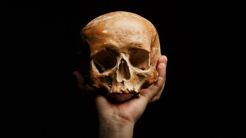 Image avec un crâne reposant sur une main